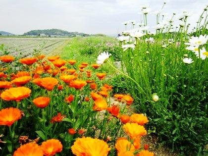 飛鳥の花の風景