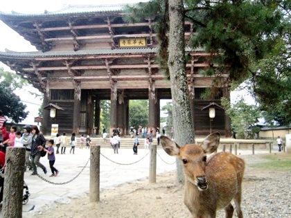 奈良公園の鹿 偶蹄目