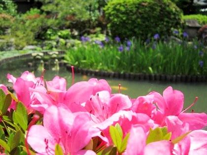 GWに咲く花
