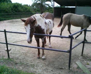 馬の背を分ける
